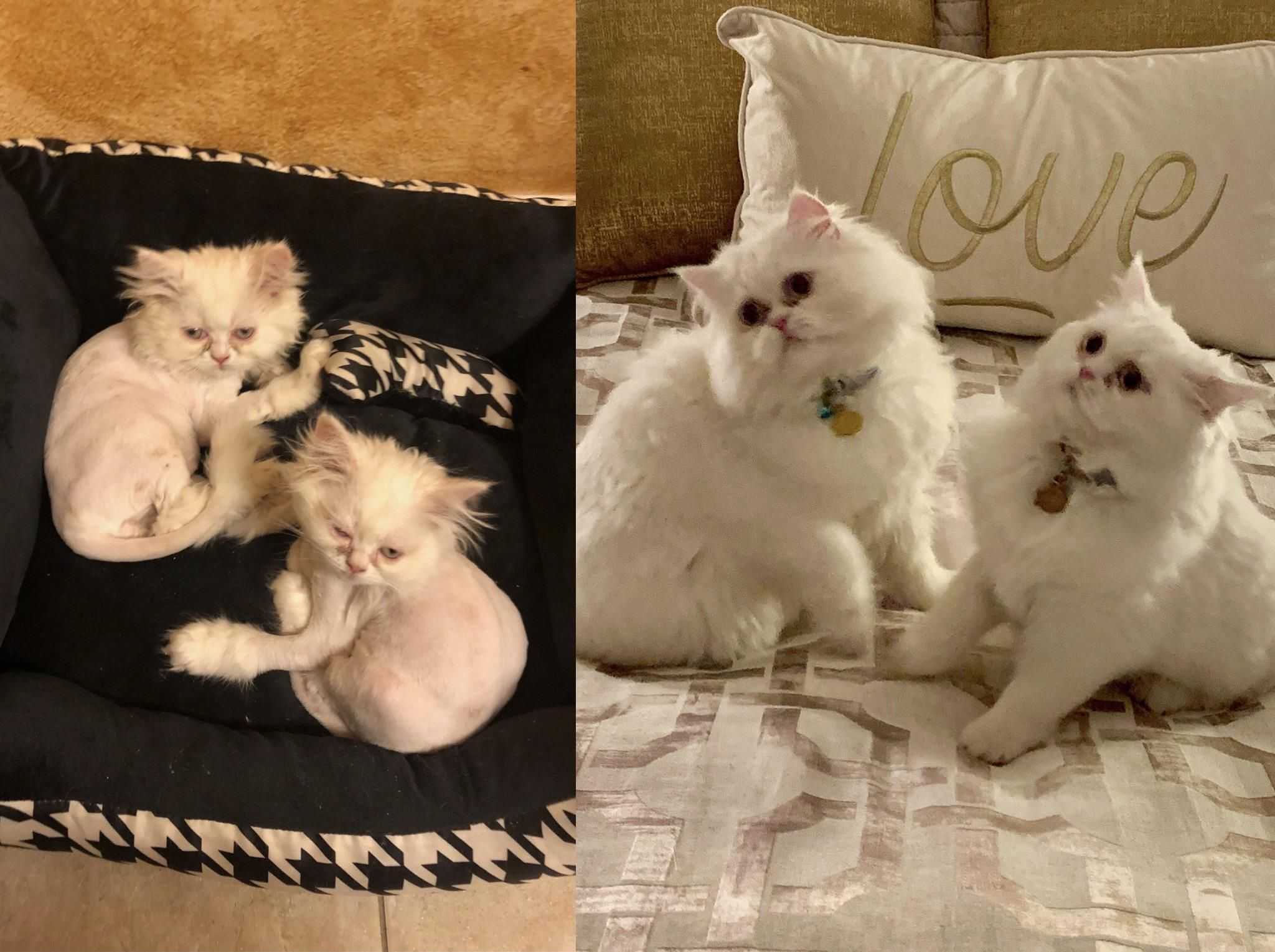 Five Months Ago My Mom Adopted Two Neglected Kittens Who Were Suffering From Ringworm Look At Them Now Http B Pet Adoption Pictures Pet Adoption Pretty Cats