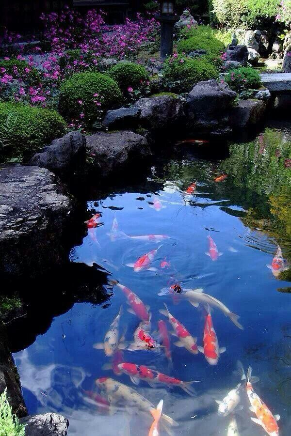 Stunning koi pond surrounded by beautiful flowers for Japan koi fish pond