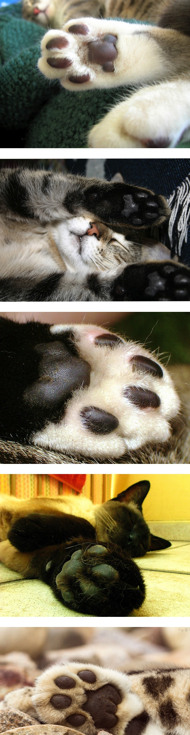 Kitty Paws Are The Most Perfect Precious Adorable Thing I Just Love Them Cat Paws Crazy Cats Cats