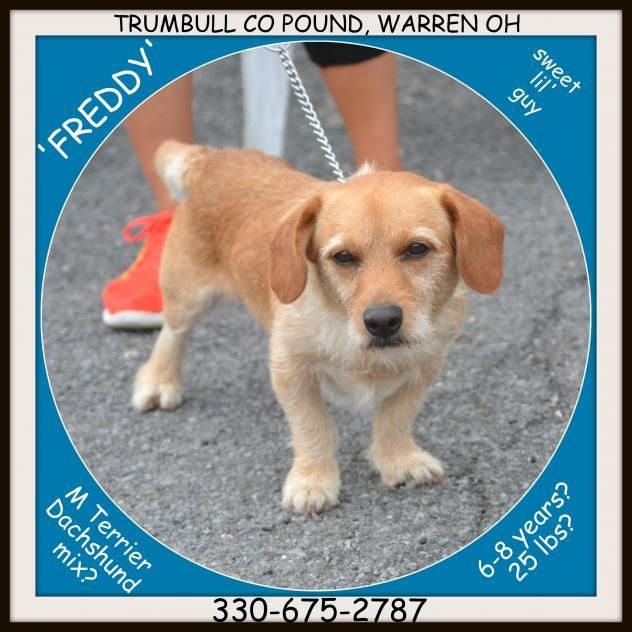 Adopt Freddy On Petfinder Dachshund Mix Dog Kennel Trumbull County