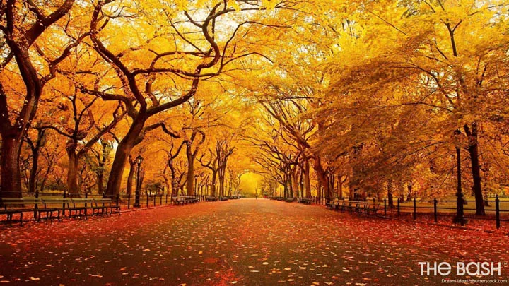 35 Autumnal Thanksgiving Zoom Backgrounds In 2020 Nature Wallpaper Background Images Landscape