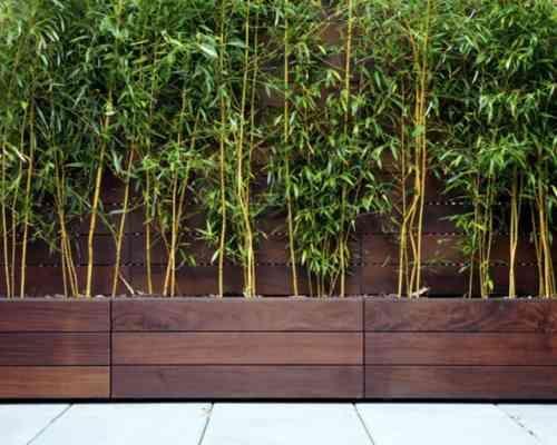 Planter des bambous dans son jardin - quelle bonne idée! | Pool ...