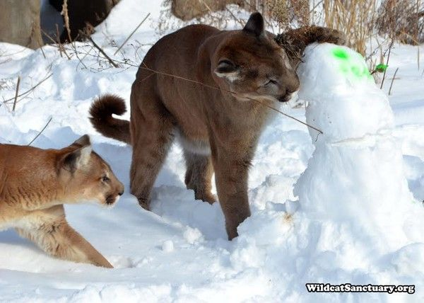 Cougar Steps In To Guide His Best Friend When She Goes Blind
