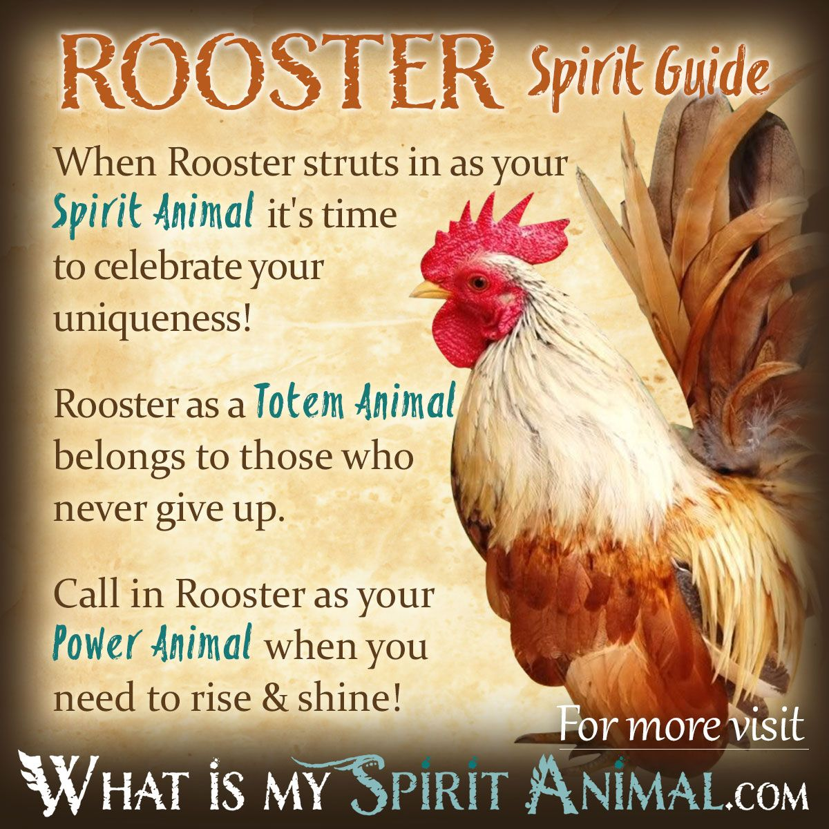 Rooster symbolism meaning power animal totems and animal rooster spirit totem power animal symbolism meaning 1200x1200 biocorpaavc Choice Image