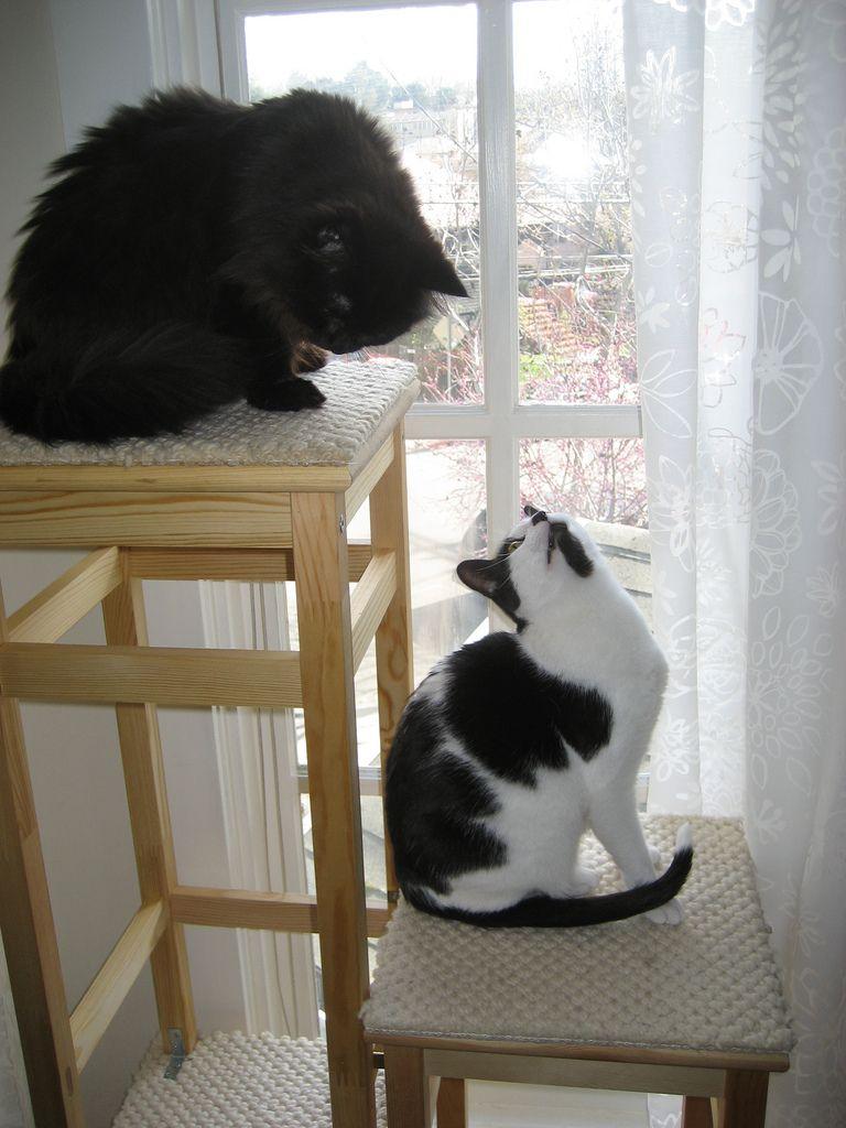 ikea hack cat tower   Cat tower ikea, Cat tower, Cats