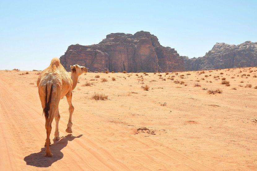 Wadi Rum #wadirum