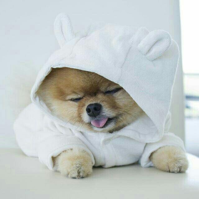 Pin By Stancu Izbasa On Jiff Boo Cute Baby Animals Cute Animals Cute Funny Animals
