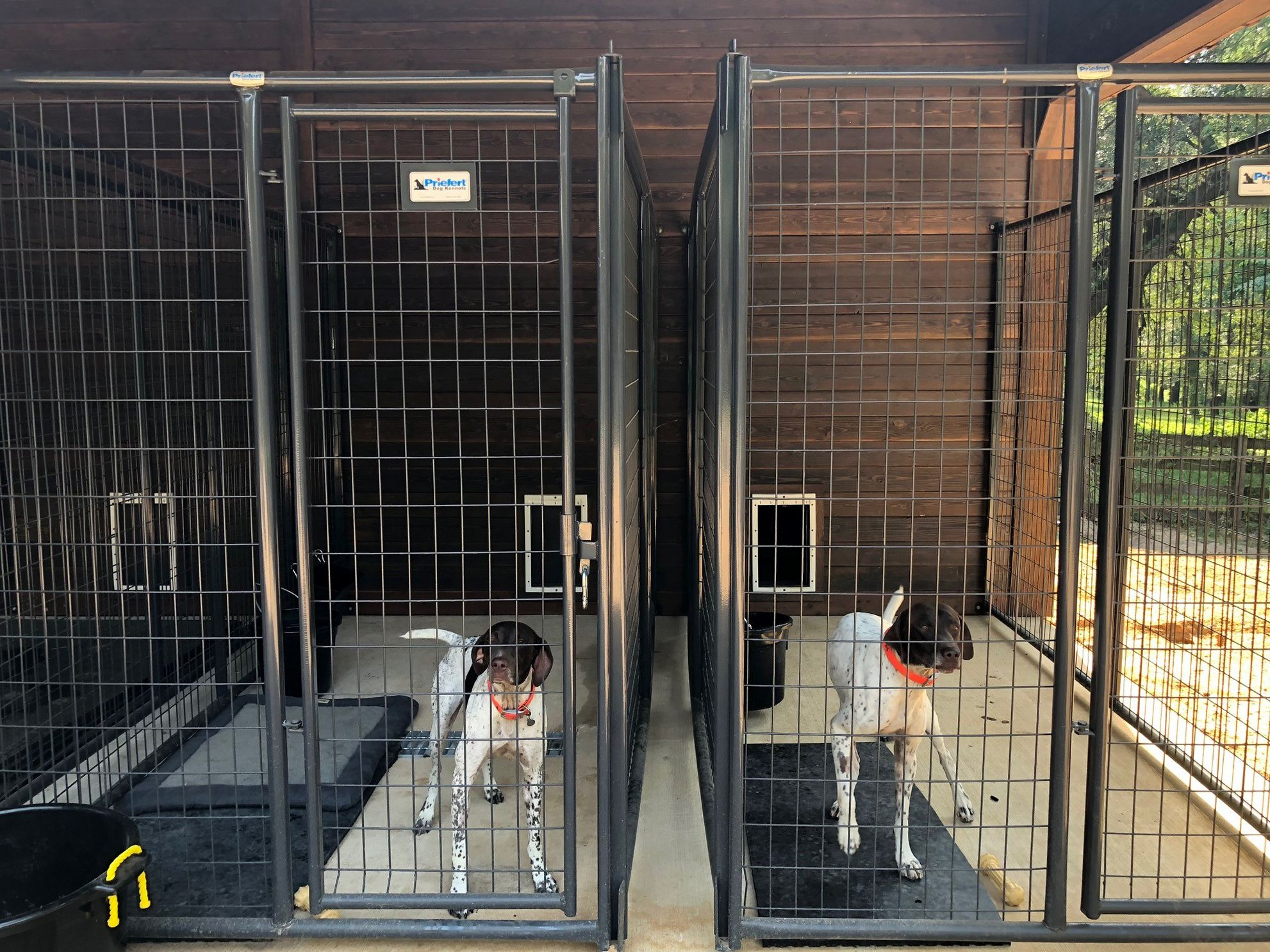 Outdoor Dog Kennels With Entrance To Indoor Barn Area Dog Kennel Outdoor Dog Breeding Kennels Dog Boarding Facility