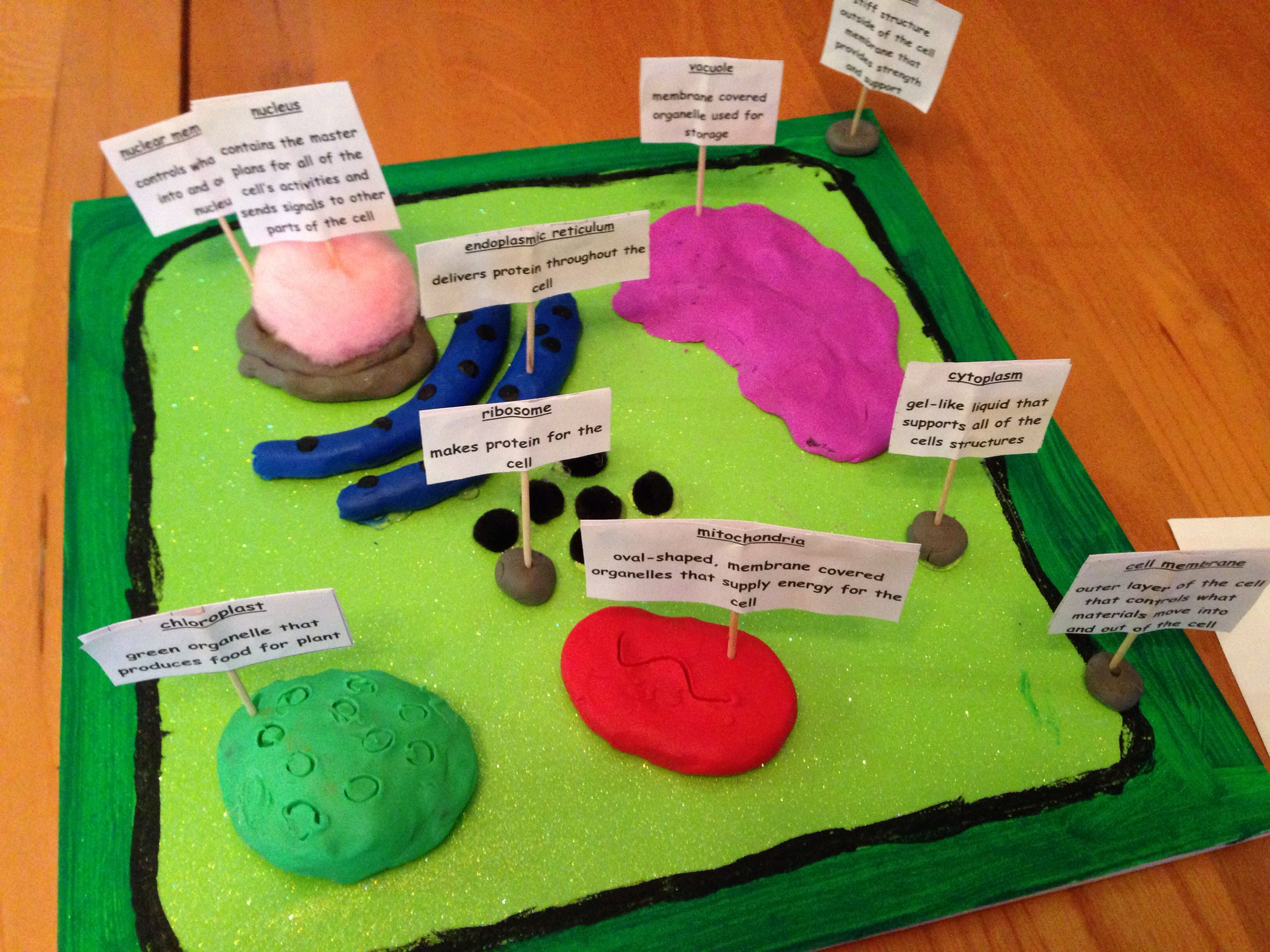 medium resolution of 3d plant cell project plant cell diagram 3d plant cell plant cell project