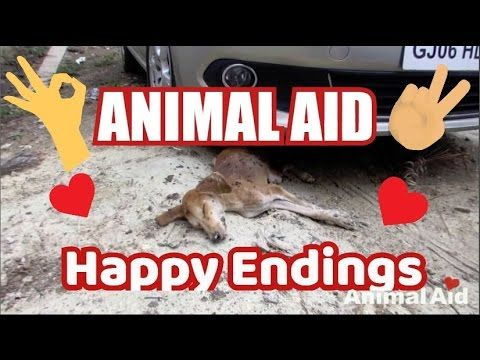 India Best Animal Aid Dog Rescues With Happy Endings Happy Endings Rescue Dogs Dog Cat