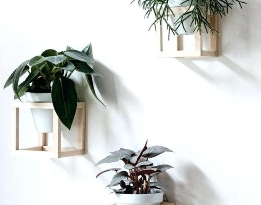 Lovely Plant:Wall Mounted Planter Indoor Plant Pots Amazing Wall Mounted Planters  Cube Wall Planterswall Hanging
