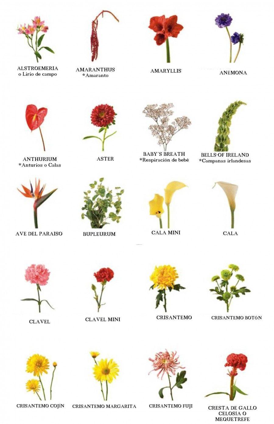 El nombre de las flores Nomes de flores, Arranjos de