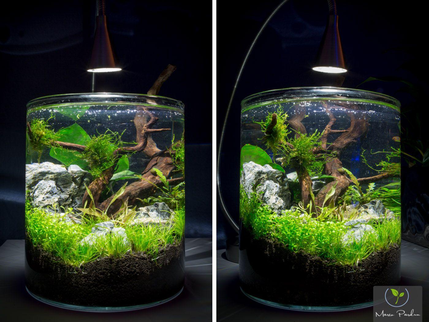 hallo leute m chte euch mein mini vorstellen mit rund 4l womit ich meine ersten aquascaping. Black Bedroom Furniture Sets. Home Design Ideas