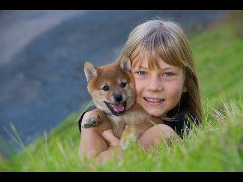 海外 柴犬って楽しそうに遊ぶから 見てて飽きない 子犬の柴犬の動画に反響 海外の反応 海外の反応 ニッポンの翻訳 shiba inu shiba inu
