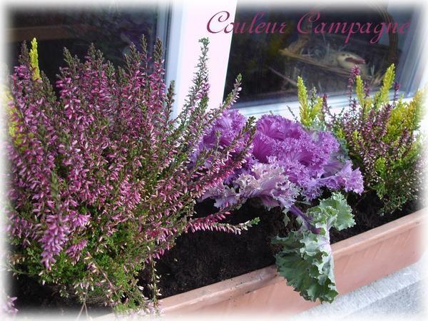 Jardini re d 39 hiver couleur campagne maison jardin for Plante jardiniere hiver
