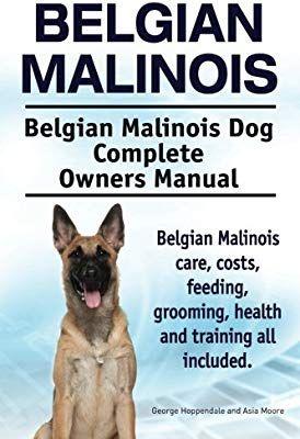 Belgian Malinois. Belgian Malinois Dog Complete Owners