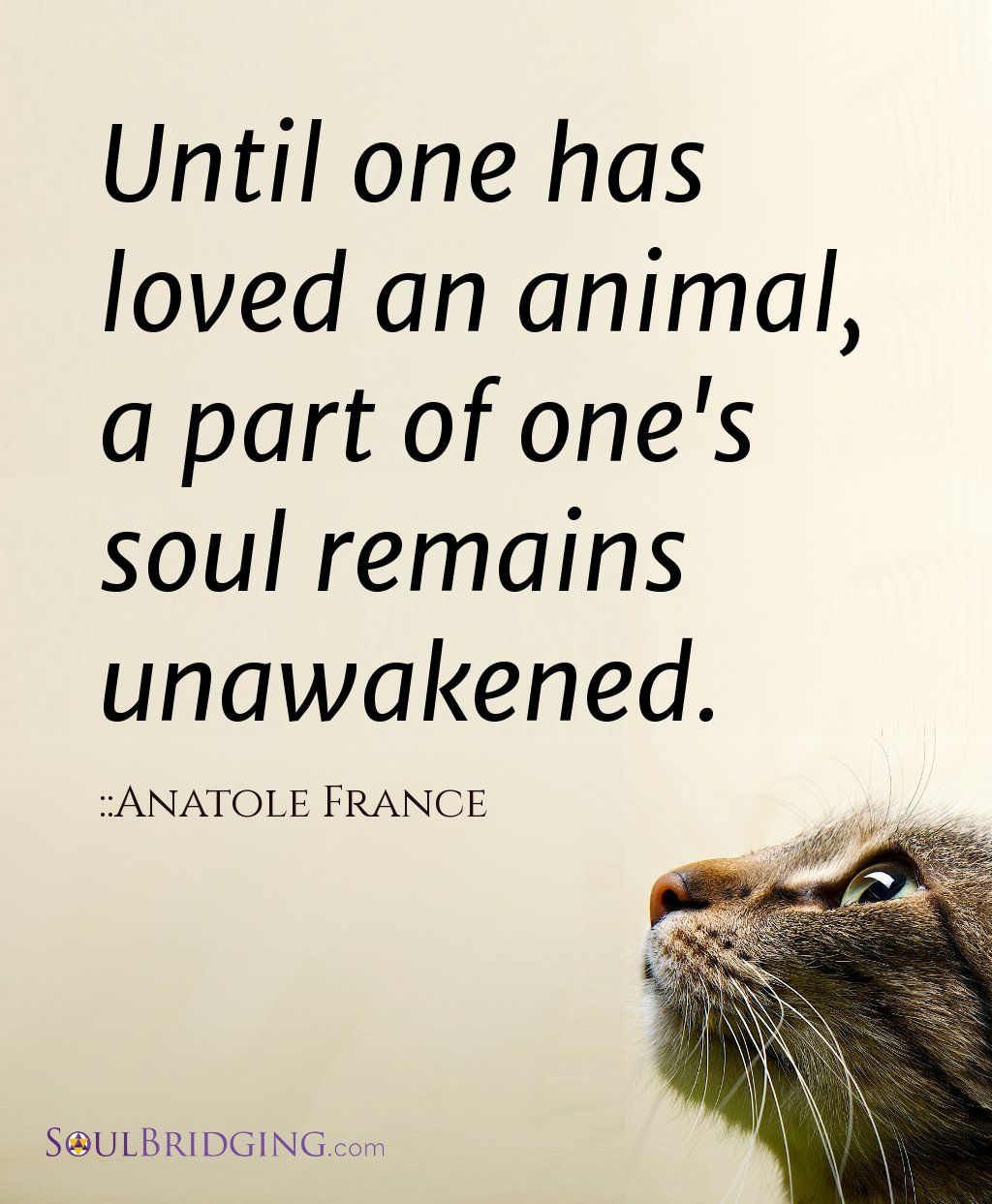 Love Animals Quotes New Books ~ Right Relationship  Pinterest  France Animal And Cat