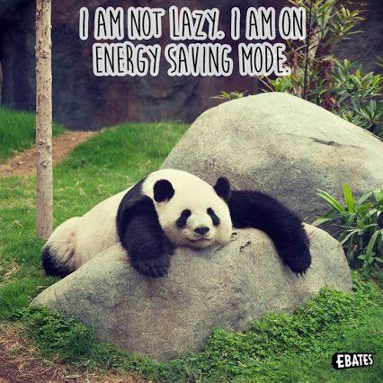 Energy Saving Mode With Images Funny Koala Panda Bear Cute