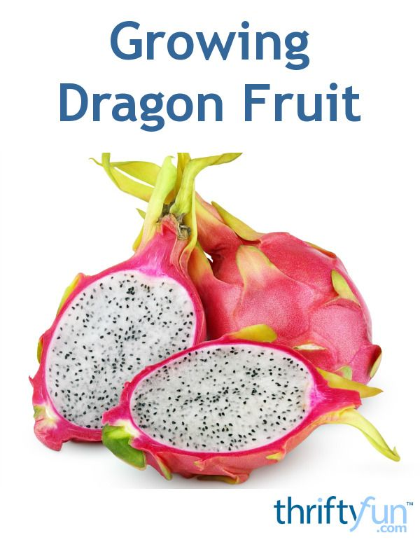 how to grow dragon fruit from the fruit