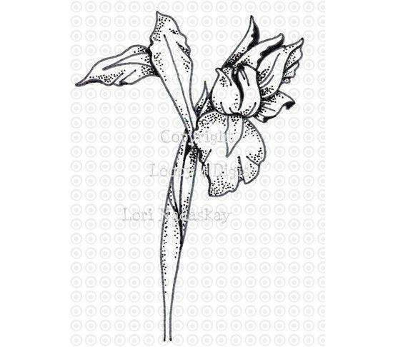 Clip Art Black and White Iris | White iris, Art, Clip art