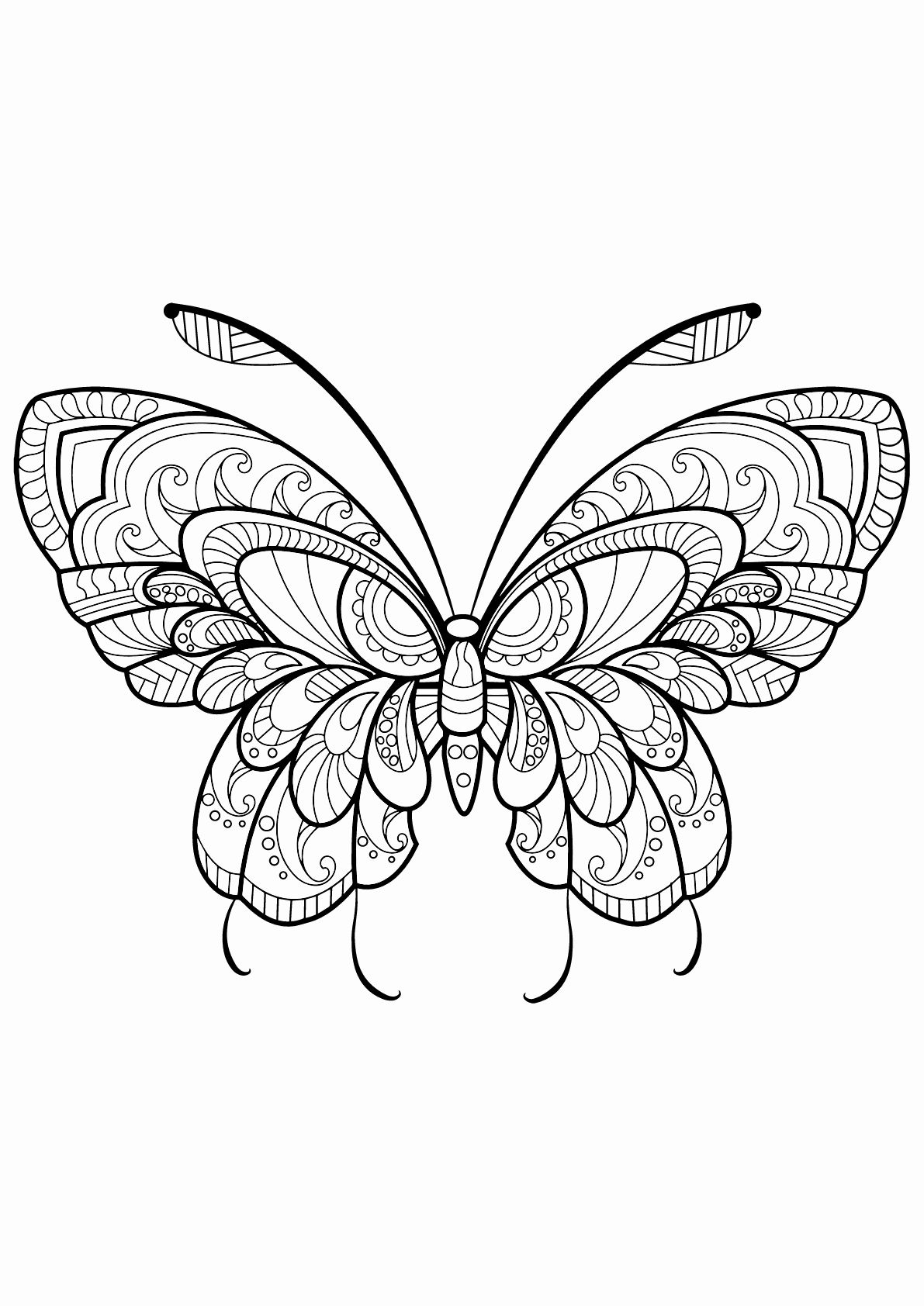 Simple butterfly Coloring Pages Kids in 2020 Butterfly