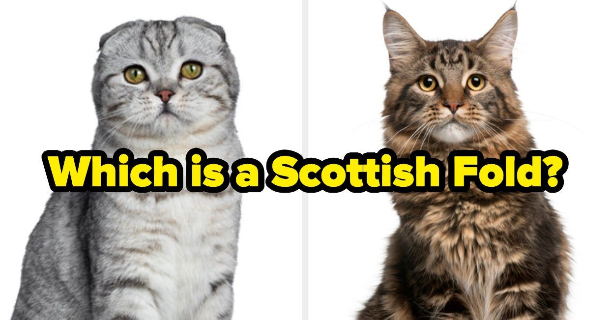 If You Can Tell These Cat Breeds Apart You Re A True Cat Expert In 2020 Cat Breeds Cats Breeds