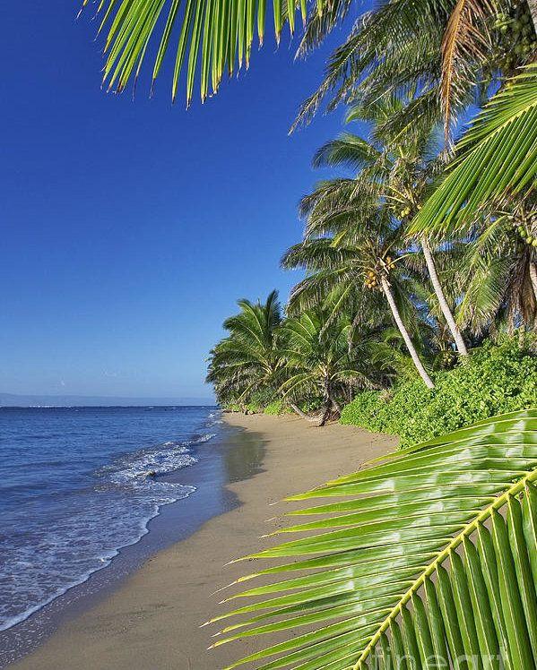 Private Beaches: Private Molokai Beach Poster By Dave Fleetham