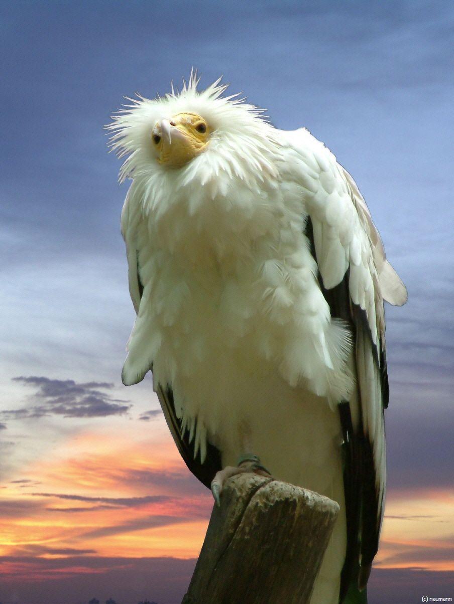 """Siegerfoto 1 """"Tiere"""" - Bing Bilder"""