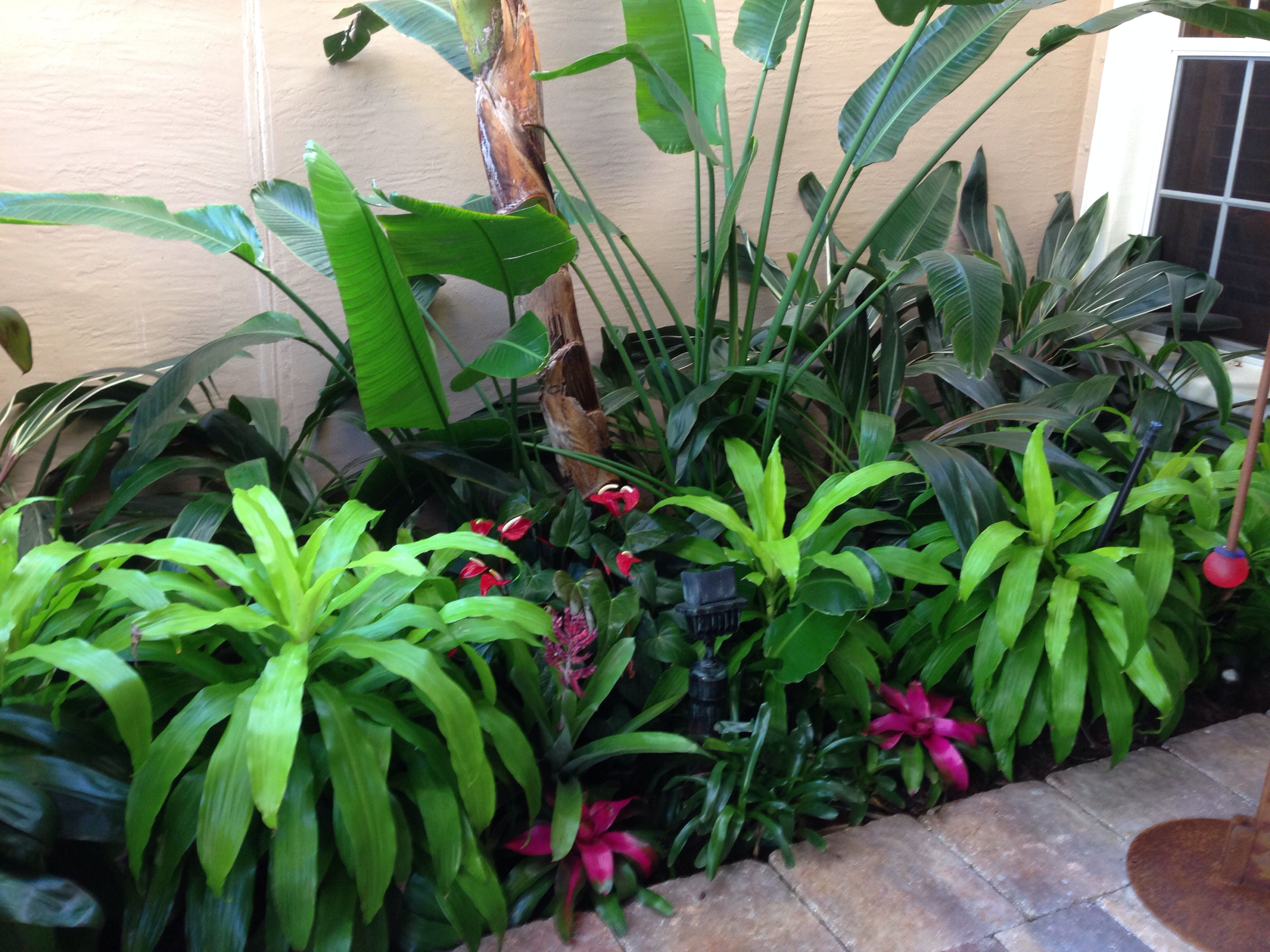 Full And Lush Tropical Entry Tropical Landscaping Yard Landscaping Landscape Design