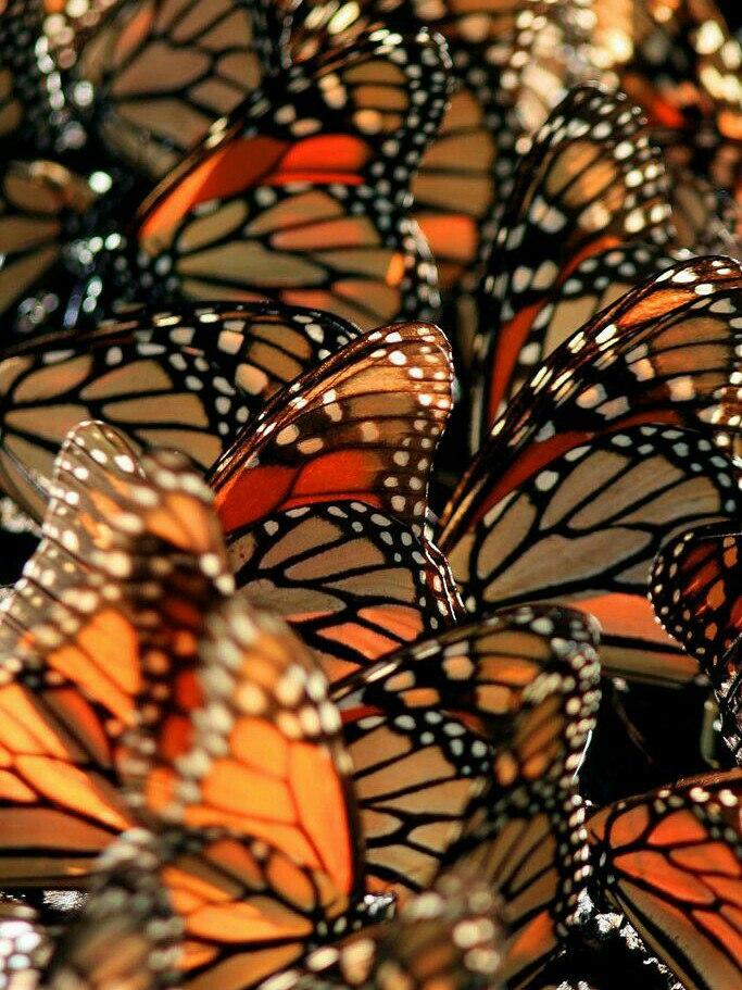Orange Butterfly Wallpaper Aesthetic