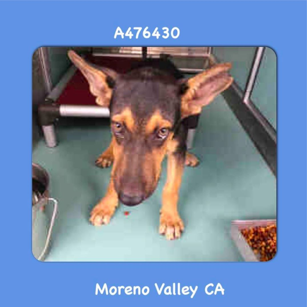 Pin By Friends Of Moreno Valley Shelter Animals On Urgent Animals In Need At Moreno Valley