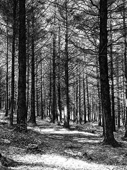 Sarah Woolfenden Cards The Quiet Forest Forest Drawing Pencil Drawings Of Nature Landscape Drawings