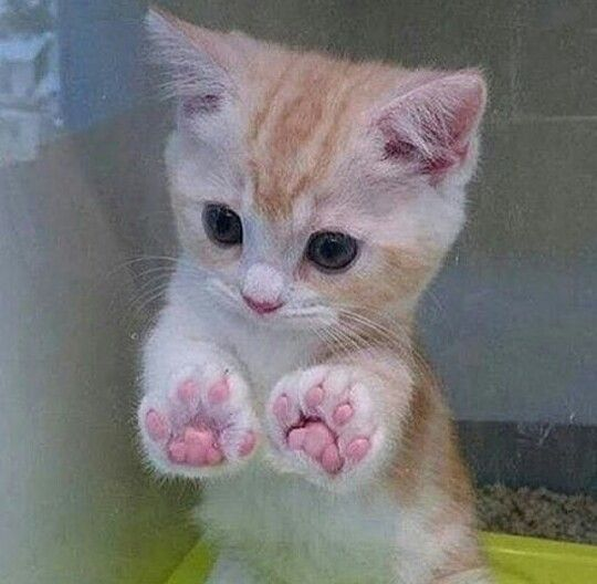 Love those little paws Cute animals
