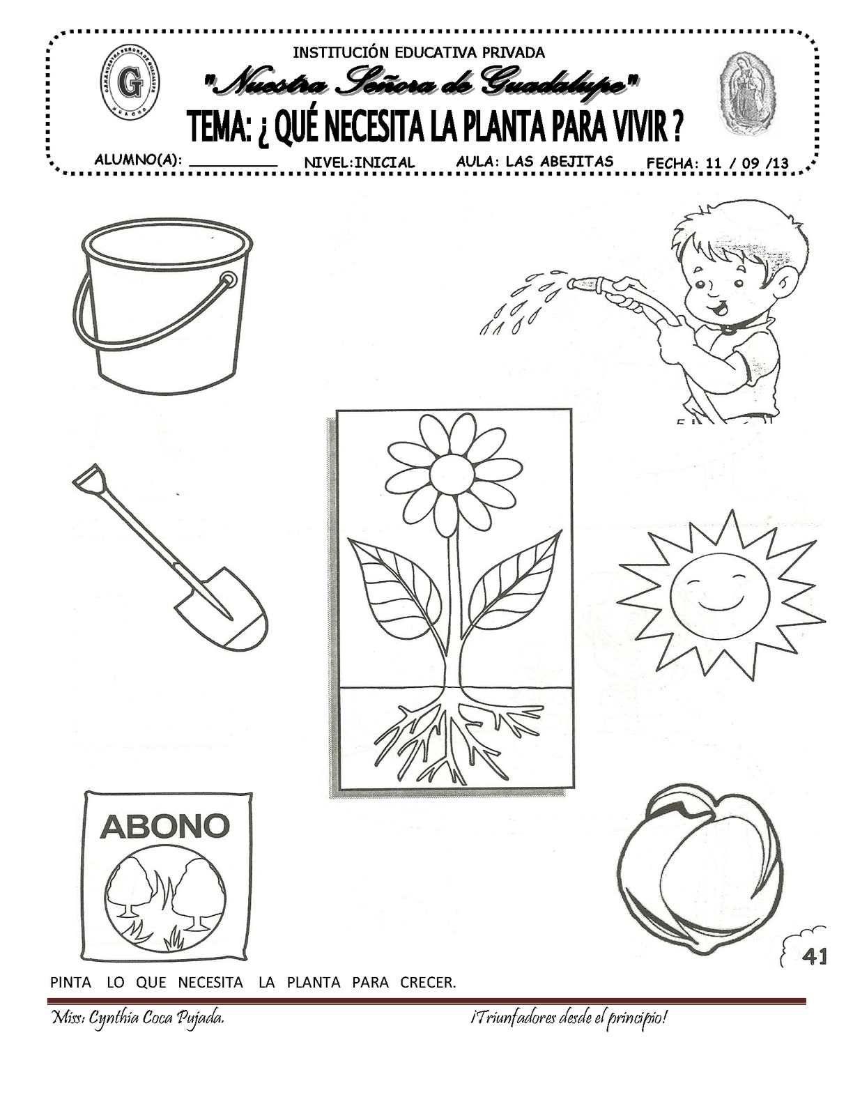 Guias De Trabajo Del 09 Al 13 De Setiembre Calameo Downloader En 2020 Ciclos De Vida De Las Plantas Ciencia Preescolar Ciencias De La Naturaleza