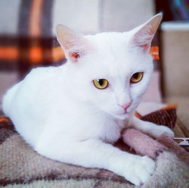 Top 100 Cat Pun Names – Funny Cat Names | Best Cat Names