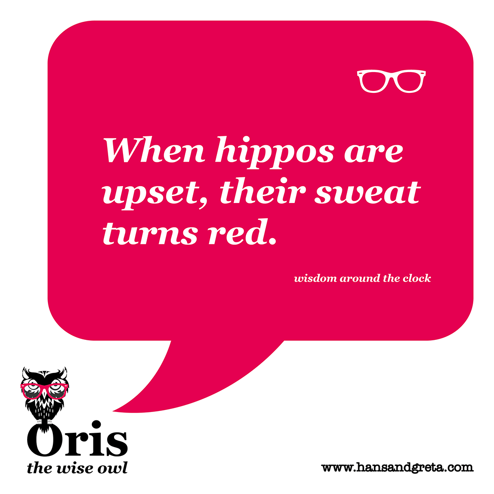 when hippos are upset, their sweat turns red. wisdom quote