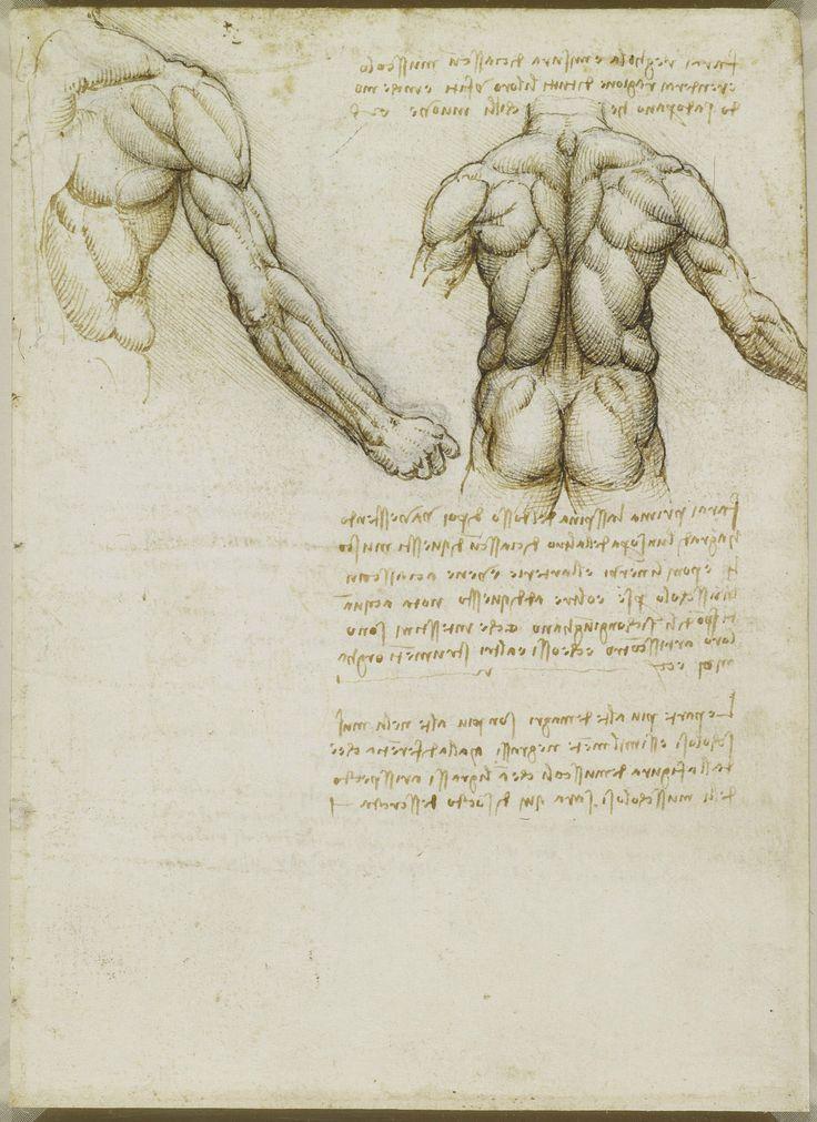 Léonard de Vinci | Torso Anatomia | Pinterest | Anatomía y Arte