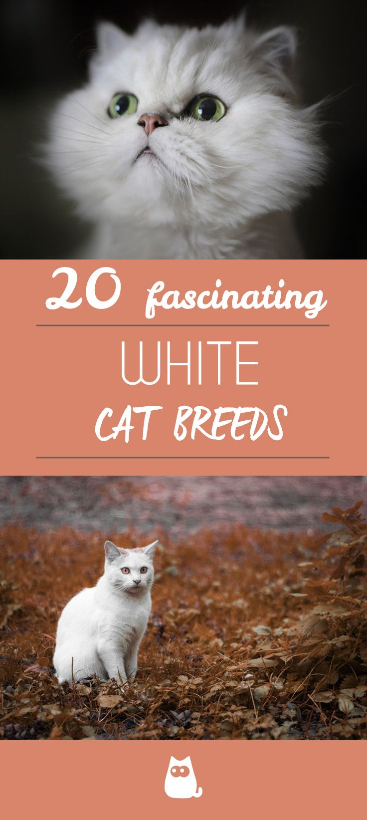20 White Cat Breeds Blue Eyes, Green Eyes A Complete