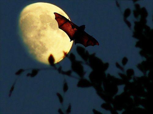 Silhouetted against the moon the gargoyle flies. (bat)
