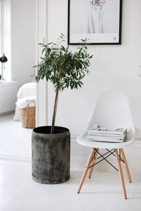 Kleine Geschichte über das Wohnen mit Pflanzen | Sweet Home