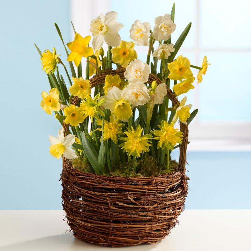Daffodils In Flower Arrangements Spring Daffodil Bulb Garden Spring Flower Arrangements Daffodils Daffodil Bulbs