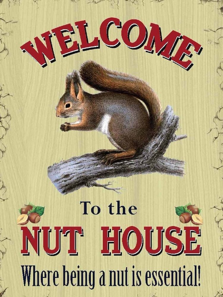 Items In Metal Signs Plaques Shop On Ebay Squirrel Illustration Animals Squirrel Art
