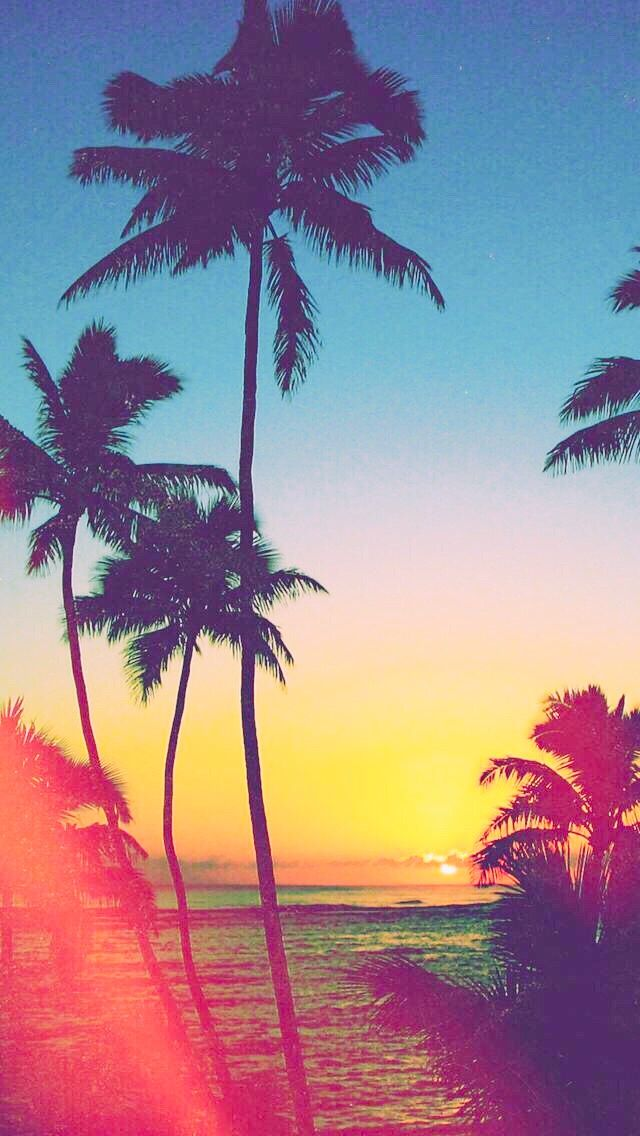 Hollywood Palm Trees Pretty Wallpapers Ocean Wallpaper