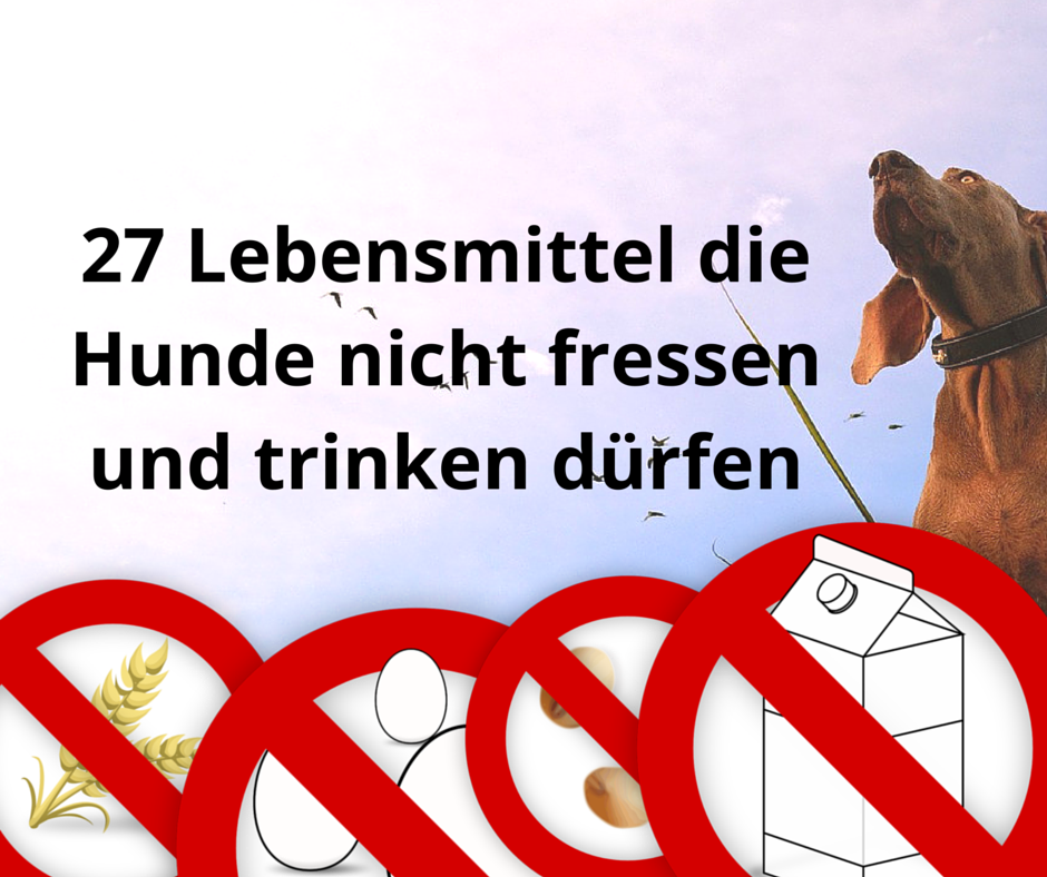 27 Lebensmittel die Hunde nicht fressen und trinken dürfen