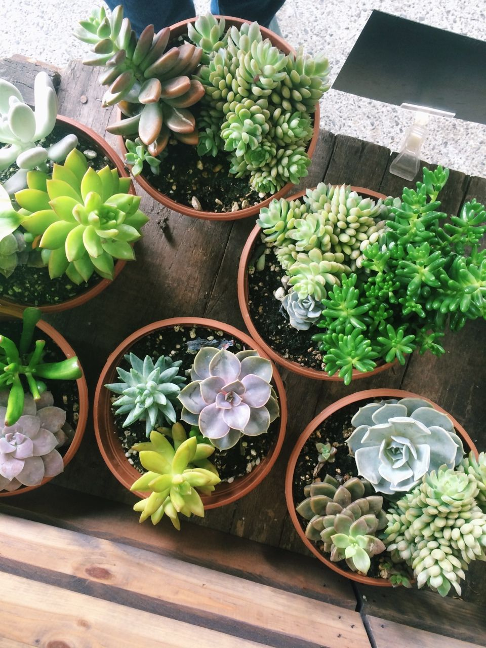 classy pictures of cactus house plants. Succulents fit our inability to keep a plant alive  while also being stylish The Little Hermitage Garden and Plants Pinterest