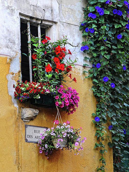 Window garden, Provence