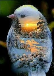 Image Result For Good Night Images With Beautiful Birds Insects