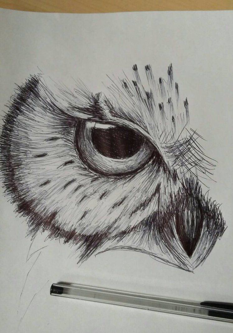 Owl sketch by cdkingof1982 on deviantart