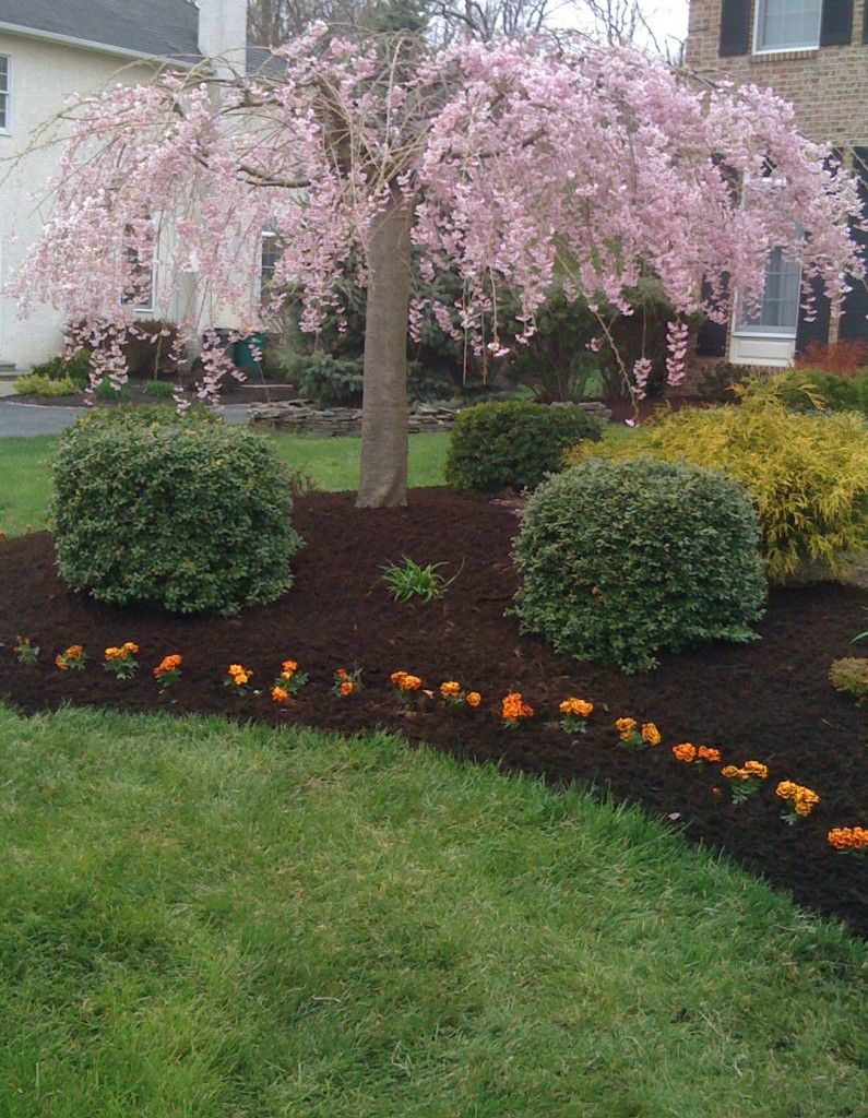 Landscaping around trees tree mulched flower bed c o for Images of landscaping flower beds