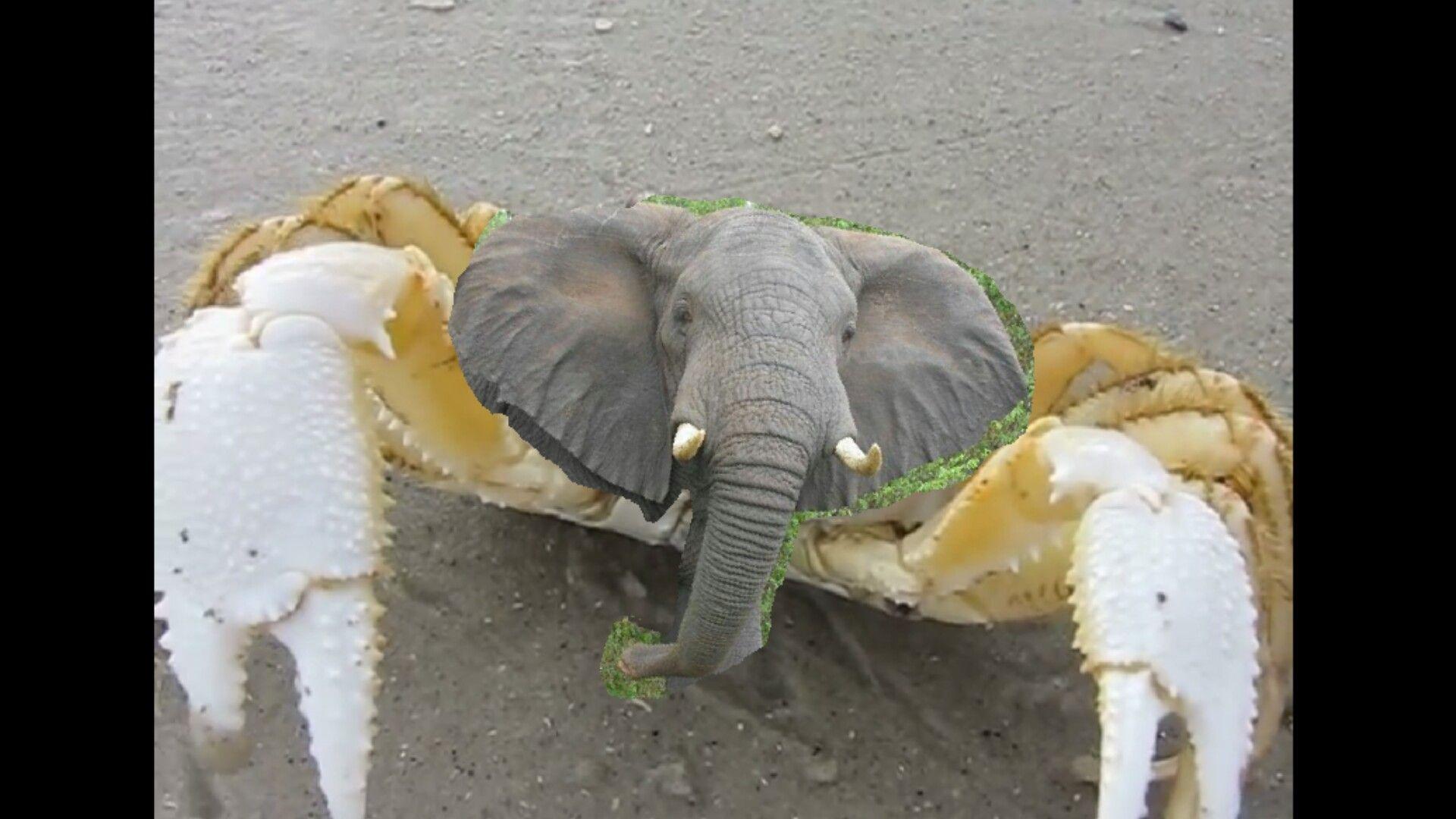 Elephant Crab   Elephant, Animals, Types of animals